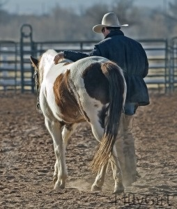 rancher walking horse