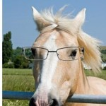 nearsighted-horse